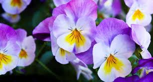 62 types of purple flowers
