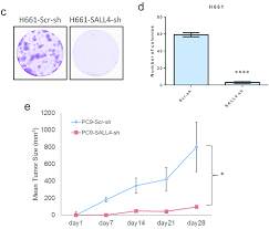 Continued Sall4 Knockdown Impaired Lung Cancer Cell
