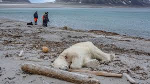 Arctic Cruise Line Staff Reportedly Shoot and Kill Polar Bear After ...