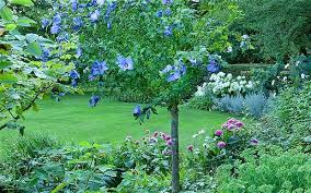 Small Picture Dont downsize your trees upsize a shrub Telegraph
