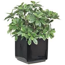 office feng shui plants. 2019 Feng Shui Plants For Office Desk \u2013 Used Home Furniture