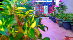 <b>Moon</b> Plain Inn (Шри-Ланка Нувара-Элия) - Booking.com