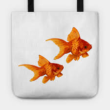 Fantail Goldfish Growth Chart The Golden Ones