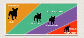 French Bulldog Weight Guide Is Your Frenchie Healthy