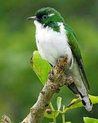 Pin by Susan Rosas on Mas pájaros 2 | Animals, Beautiful birds, Pretty birds