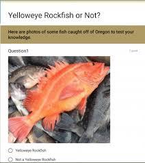 Rockfish Identification Chart Rockfish Identification Tips Oregon Department Of Fish