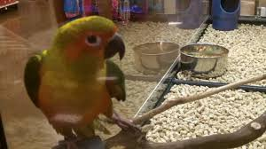 petco animals birds.  Birds Pet Birds At Petco U0026 Petsmart On Animals YouTube