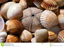 sea shells collection sea shell collection stock photo image of still seashell 4963700