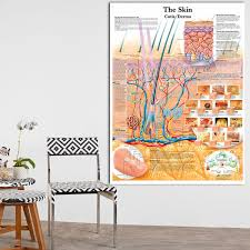 Laminated Anatomical Charts 2019 Anatomy Dissection Skin Anatomical Charts Posters Laminated Canvas Print Wall Pictures For Medical Education Home Decor No Frame From