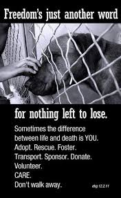 animal rescue quotes and sayings. Dog Rescue Quotes And Sayings Google Search Intended Animal