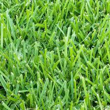 Grass Backyard Internet 206664677 Blender Market Harmony 500 Sq Ft St Augustine Sod 1pallethh500sa1 The Home
