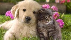 Sonunda: Hayvanları Koruma Kanunu Kabul Edildi - Dijimag