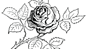 free printable flower coloring pages free coloring pages flowers flower printable free printable flower mandala coloring