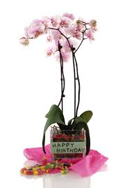 diy orchid birthday gift project