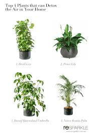 top 4 plants that can help detox indoor air at home