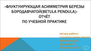 Отчёт по учебной практике Флуктуирующая асимметрия березы   Флуктуирующая асимметрия березы бородавчатой betula pendula ОТЧЁТ по учебной практике