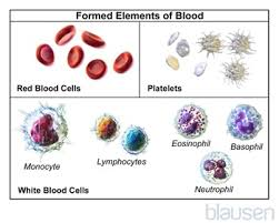 elements of blood diagram elements database wiring diagram components of blood blood disorders merck manuals consumer version