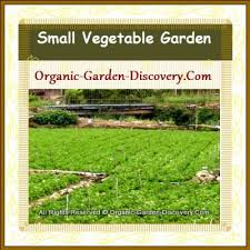 garden design from cameron highlands growing vegetables