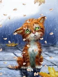 """Résultat de recherche d'images pour """"gif chat sous la pluie bisous"""""""