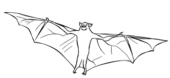 Small Picture bat coloring pages 12 ColoringPagehub