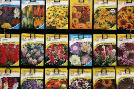garden seed. Seed Packets On Display Garden