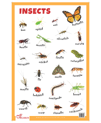 Insects Educational Chart English