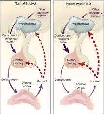 Effects Of Mindful Movement On Neuroendocrine Regulation One Mind