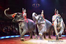 circus krone februar programm