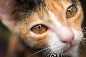 4 cool facts about cat eyes
