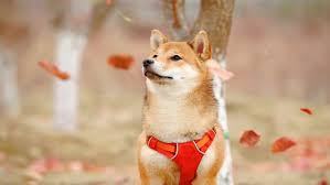 Dogecoin (doge) is a cryptocurrency and digital payment platform which was created to reach a broader demographic than typical digital currencies. Dogecoin Price Doge Price Index And Live Chart Coindesk