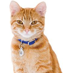 Image result for pictures of cats