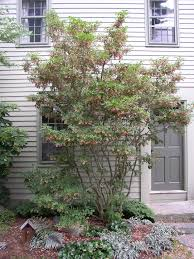 mud bay bark and garden center. wholesale nursery specializing in dwarf conifers, rhododendron, native plants, bamboo. growing quality plants one to seven gallon containers for mud bay bark and garden center