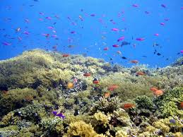 important life zones of the ocean from which the marine biotic important life zones of the ocean from which the marine biotic communities can be studied essay