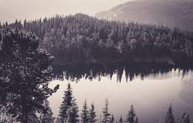black and white nature wallpaper. Brilliant Nature Seablackandwhitenatureforestmonochromewallpapersblackandwhite Widescreenimagesdarkwallpaperssinglecolorwallpaperscolorviewdesktop   Inside Black And White Nature Wallpaper N