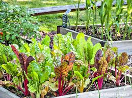 Kitchen Garden Vegetables How Much To Plant Per Person In The Vegetable Garden