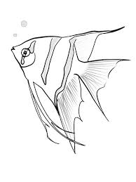 Small Picture Angelfish coloring pages Download and print Angelfish coloring pages
