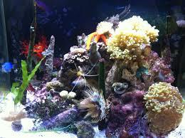 Saltwater Aquarium Lighting Guide Nano Reefs Do It Yourself Guide