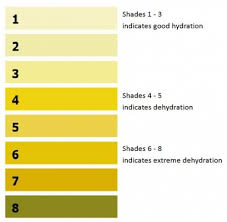 Urine Hydration Chart Australia Hydration Village Physiotherapy And Rehab Shellharbour