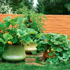 garden pots and planters outdoor planting pots ideas garden pots and planters  cheap outdoor pots and