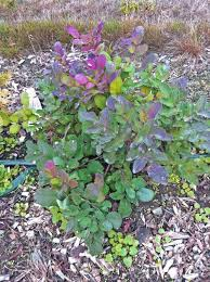Small Picture 19 best Plants for winter interest images on Pinterest Branches