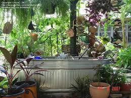 water gardening galvanized stock tank