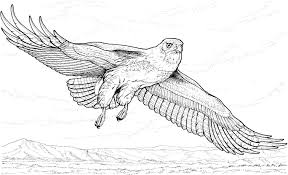 Small Picture Free Printable Bald Eagle Coloring Pages For Kids For Page esonme
