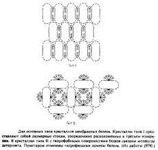 Биология Изучение трехмерной структуры с помощью рентгеновской  Кристаллы типа ii образуют белки фотосинтетического реакционного центра rhodopseudomonas viridis Имеются данные что близка к завершению работа по