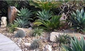 Small Picture Style Ideas Drought Tolerant Plants John Mackie Horticultural