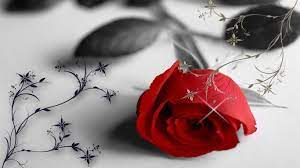 Desktop Wallpaper Rose Flowers