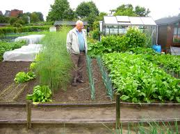best soil for vegetable garden. gypsy best soil for organic vegetable garden 38 about remodel amazing home design your own with