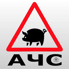 """Результат пошуку зображень за запитом """"захворювання свиней на АЧС"""""""