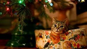 Christmas Cat Desktop Wallpaper