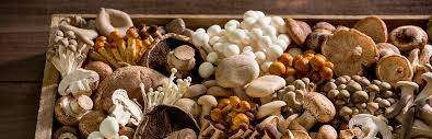 Image result for types of edible mushrooms