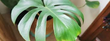 best indoor houseplants for low light